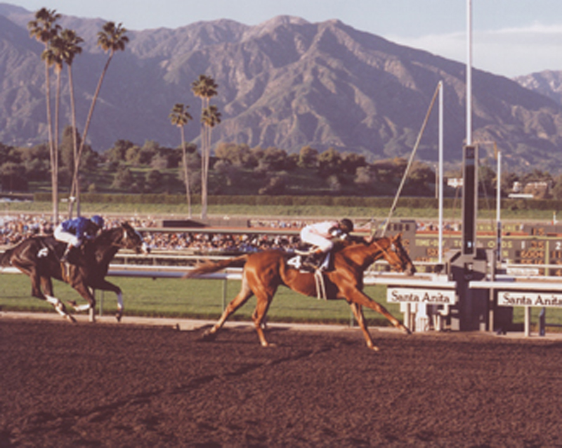 2011.21.28: Affirmed with Steve Cauthen up winning the 1978 San Felipe Handicap at Santa Anita Park (Bill Mochon)