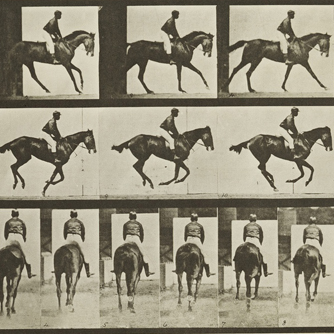 Eadweard Muybridge, Animal Locomotion, Plate 620 (Canter; saddle; thoroughbred bay mare Annie G.), 1887, collotype (photomechanical print), The Jack Shear Collection of Photography at the Tang Teaching Museum, 2015.1.31 (detail)