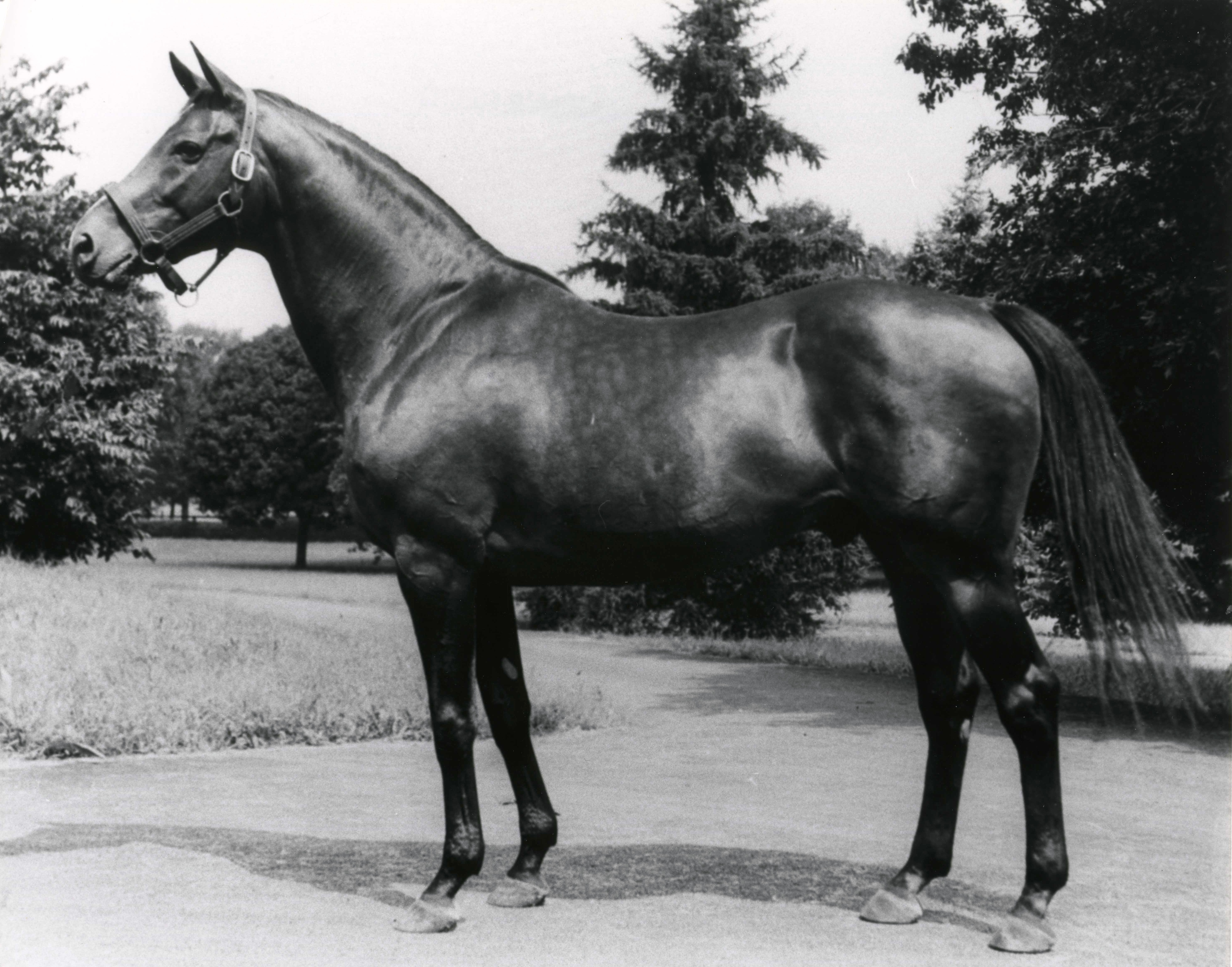 Johnstown (The BloodHorse/Museum Collection)