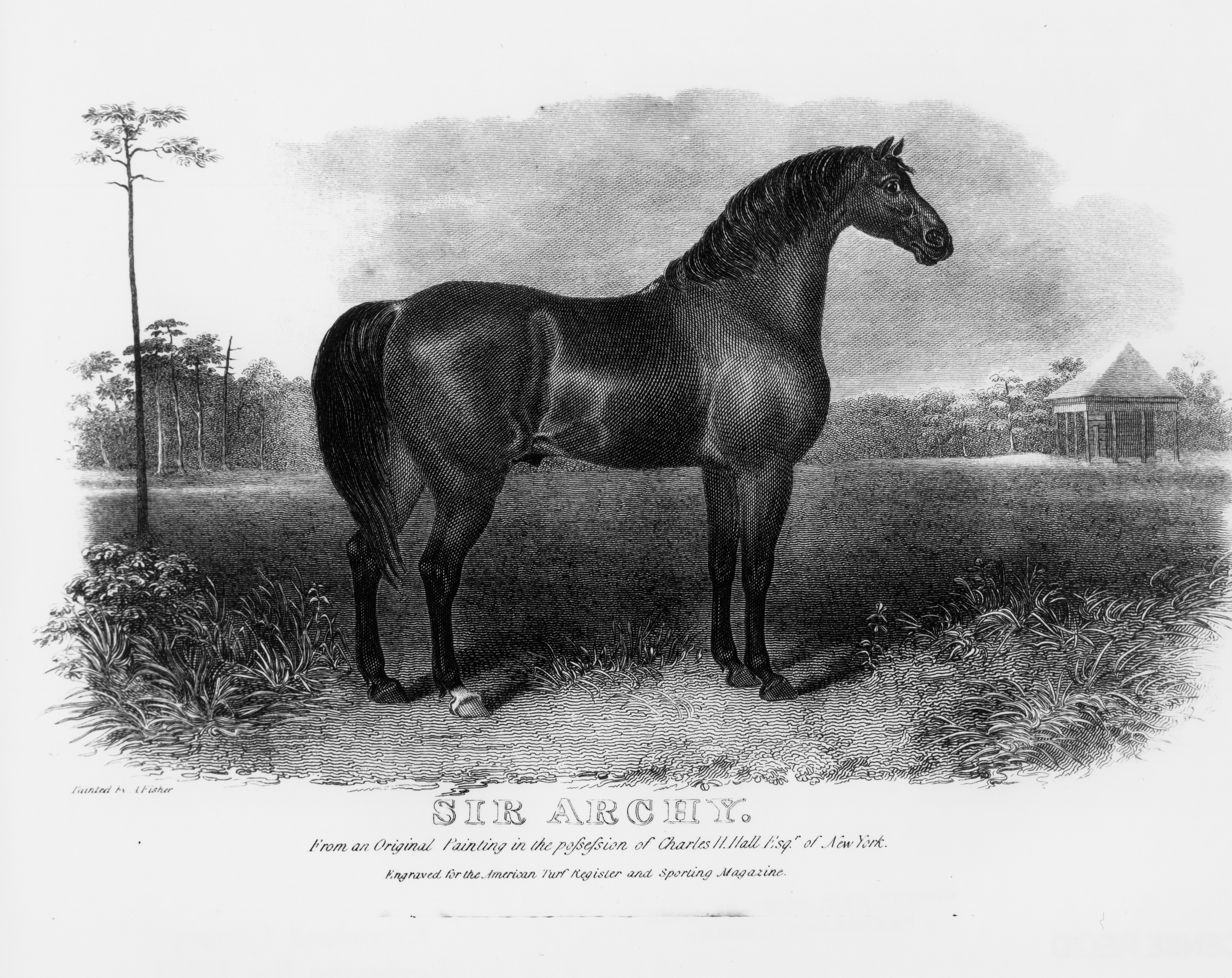 A likeness of Sir Archy based on a painting by Alvan Fisher (Keeneland Library Collection/Museum Collection)