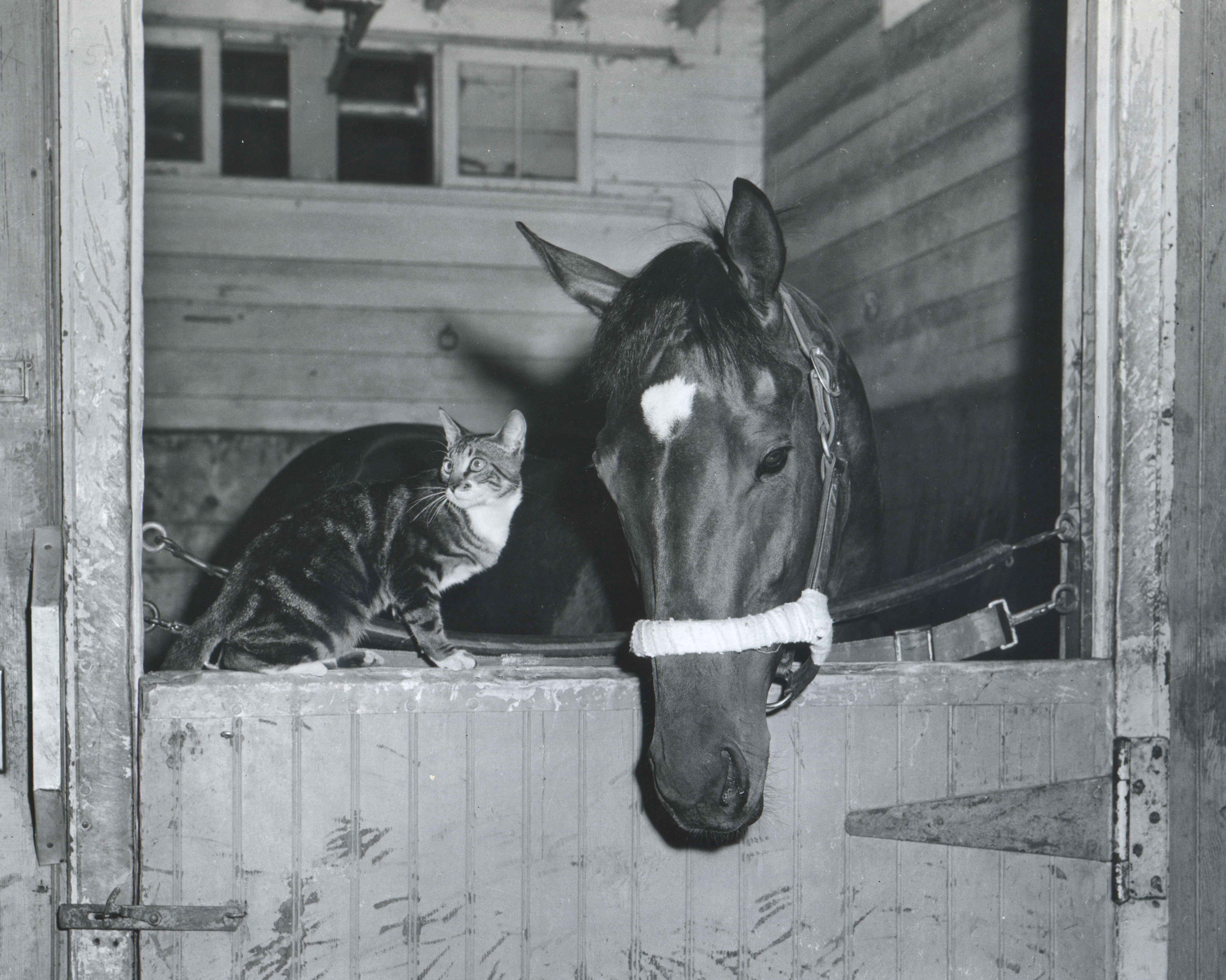 Needles with his feline friend, Boots, at Belmont Park, May 1956 (Keeneland Library Morgan Collection/Museum Collection)