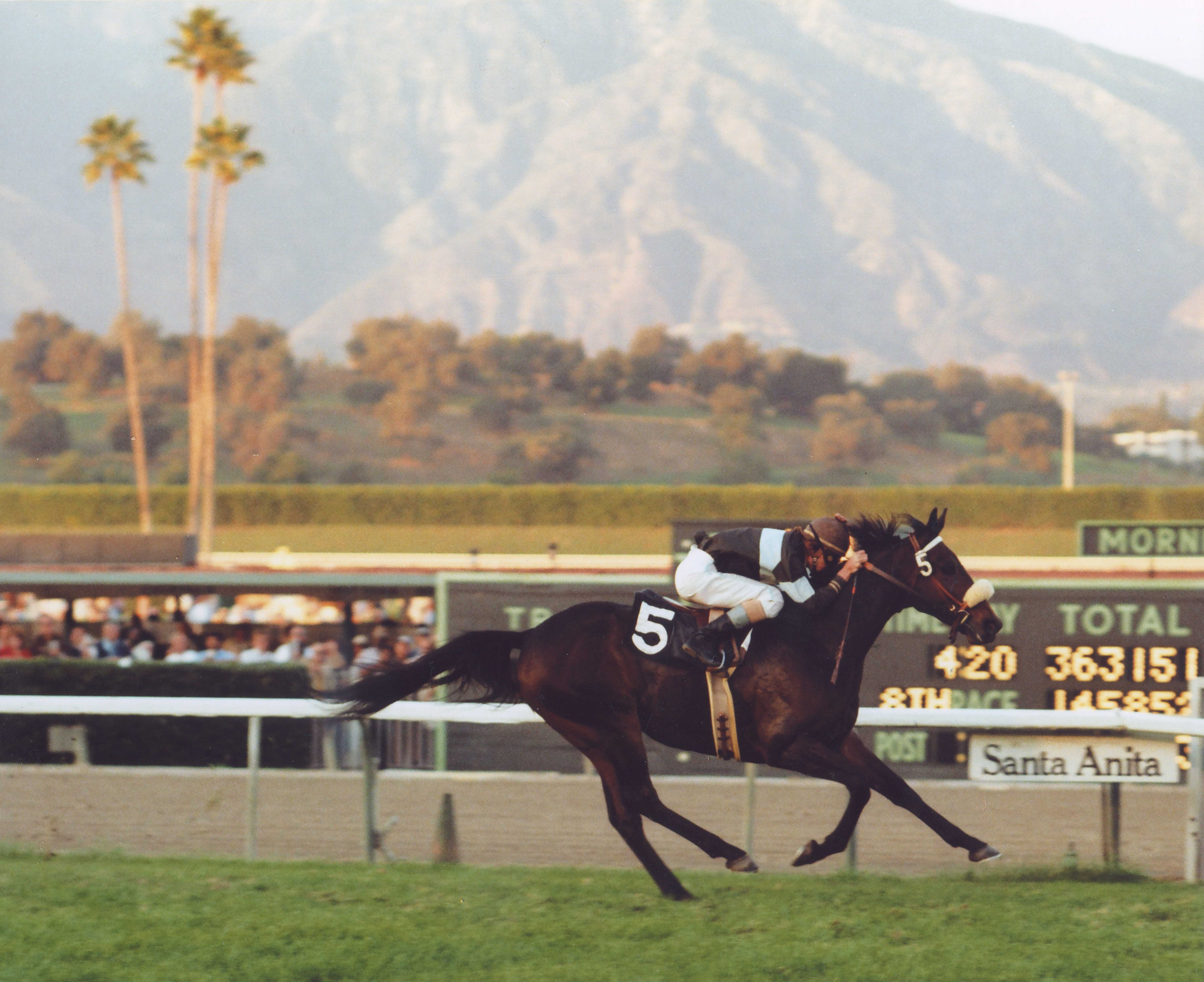 John Henry (Darrel McHargue up) winning the 1979 Henry P. Russell Handicap (Division 2) at Santa Anita (Bill Mochon/Museum Collection)