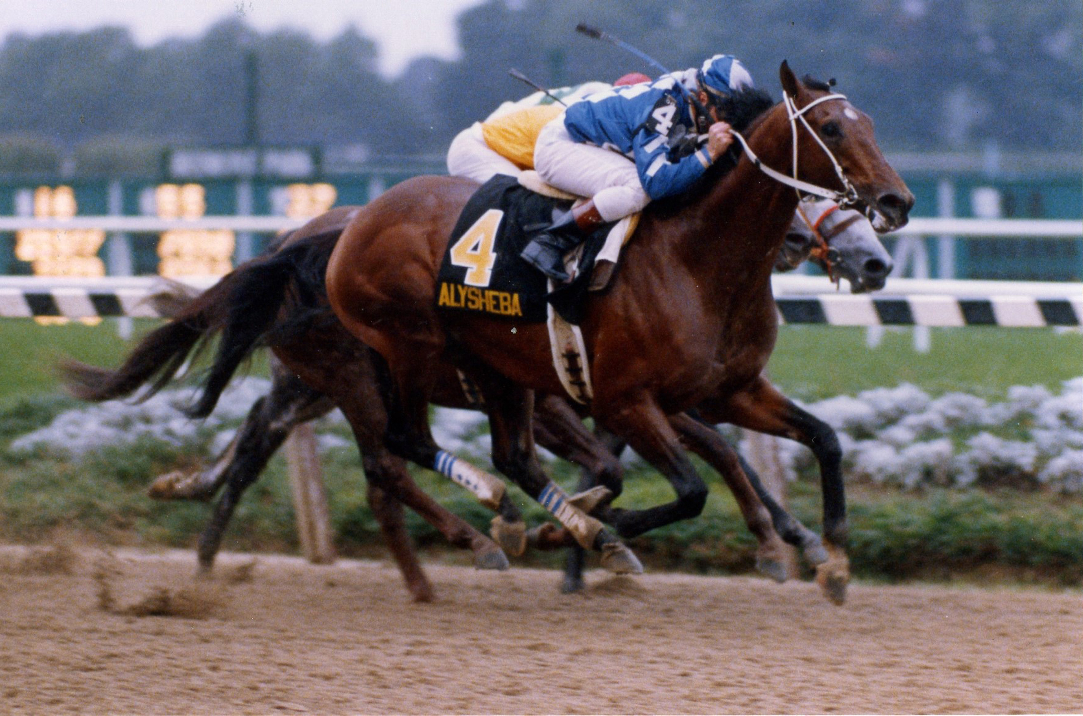 Alysheba (Chris McCarron up) wins the 1988 Woodward at Belmont Park (Barbara D. Livingston/Museum Collection)