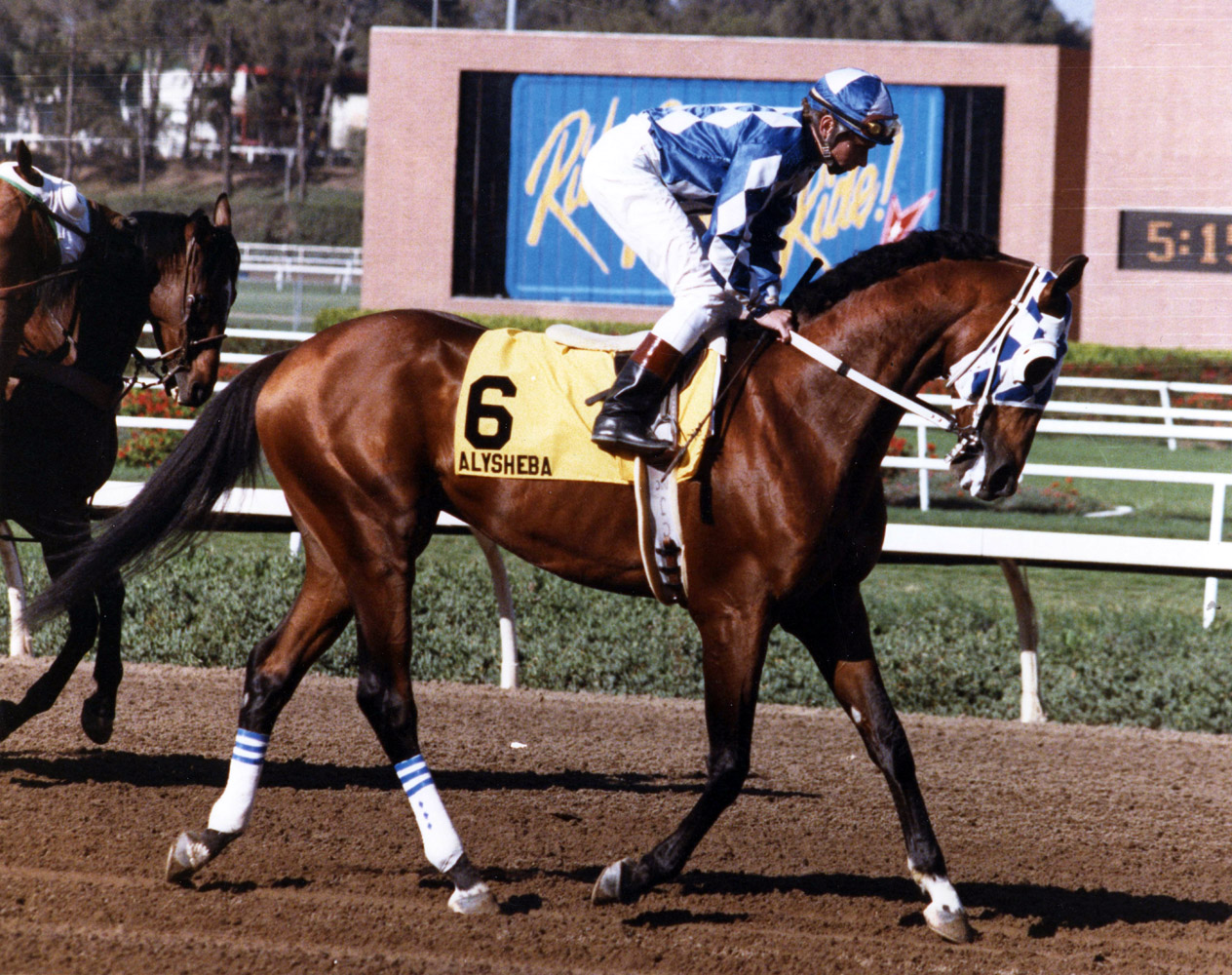 Alysheba with Chris McCarron up (Dan Johnson/Museum Collection)