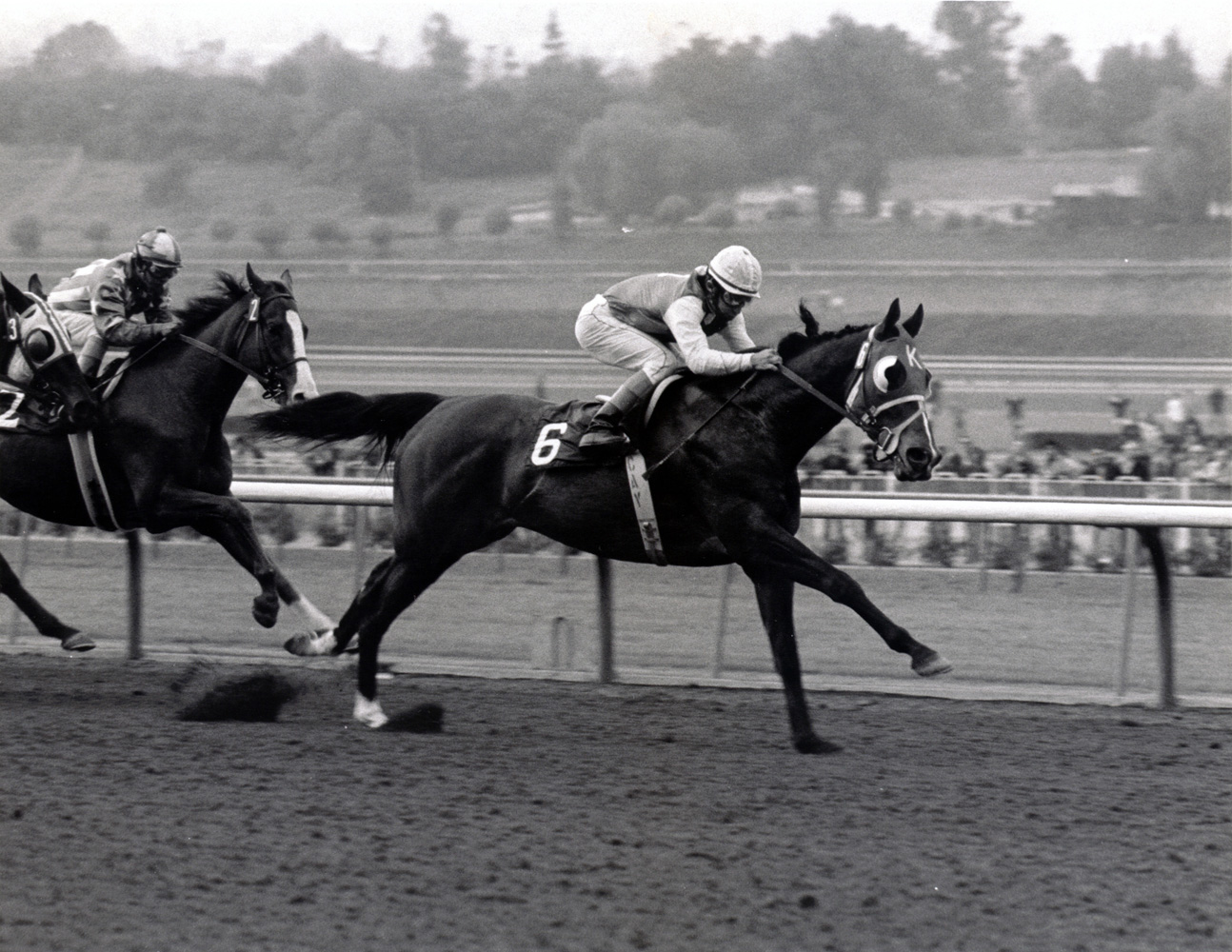 Ancient Title (Laffit Pincay, Jr. up) wins the 1974 San Fernando at Santa Anita (Bill Mochon/Museum Collection)