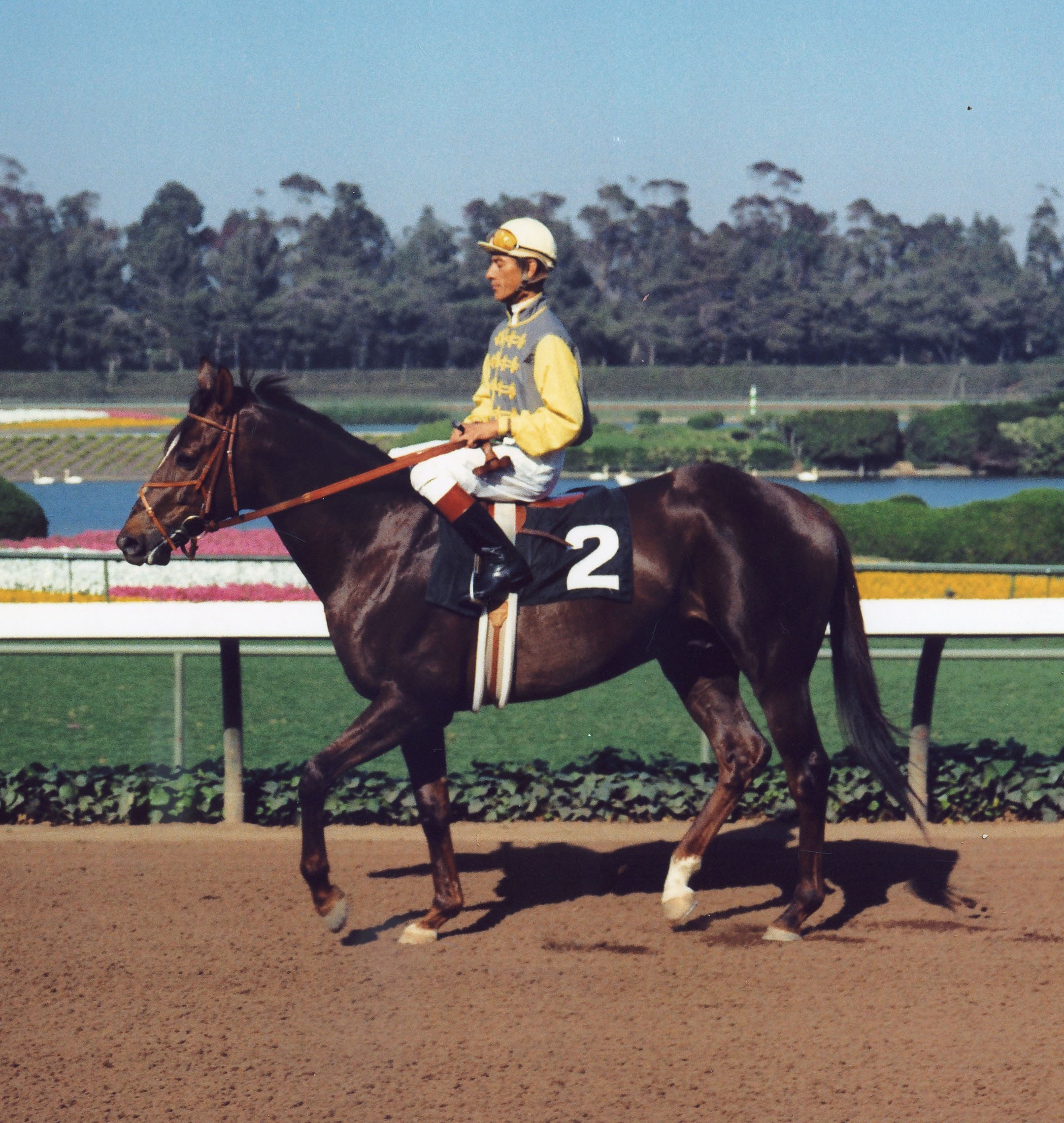 Arts and Letters (Braulio Baeza up) at Hollywood Park, 1970 (Vic Stein & Assoc./Bill Mochon Photo Collection /Museum Collection)