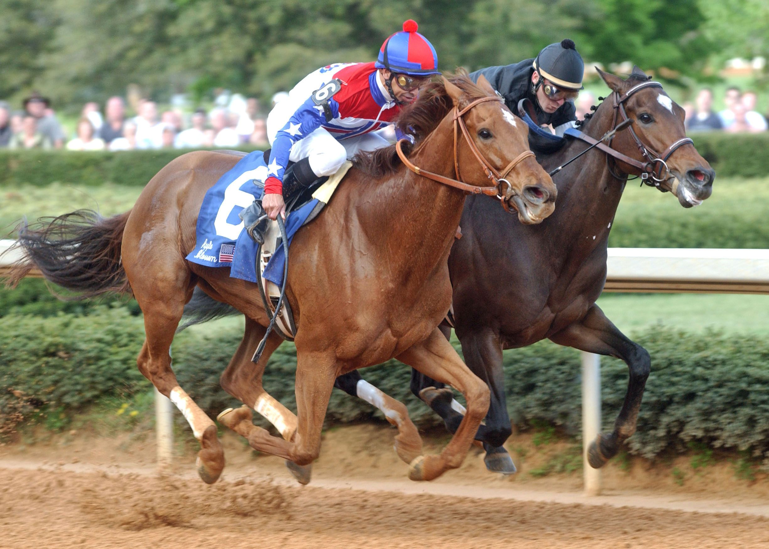 Azeri, left with Mike Smith up, 2003 Apple Blossom Handicap at Oaklawn Park (Oaklawn Park Photo)