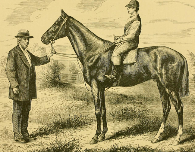 "Illustration of Harry Bassett from ""Famous American Racehorses,"" 1877 (Museum Collection)"