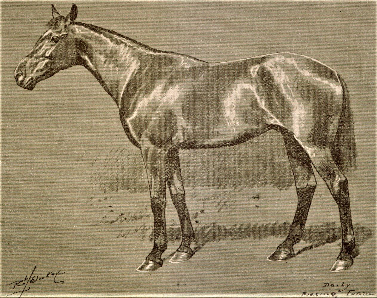 Illustration of Ben Brush from the Daily Racing Form, May 1896 (Keeneland Library Collection/Museum Collection)