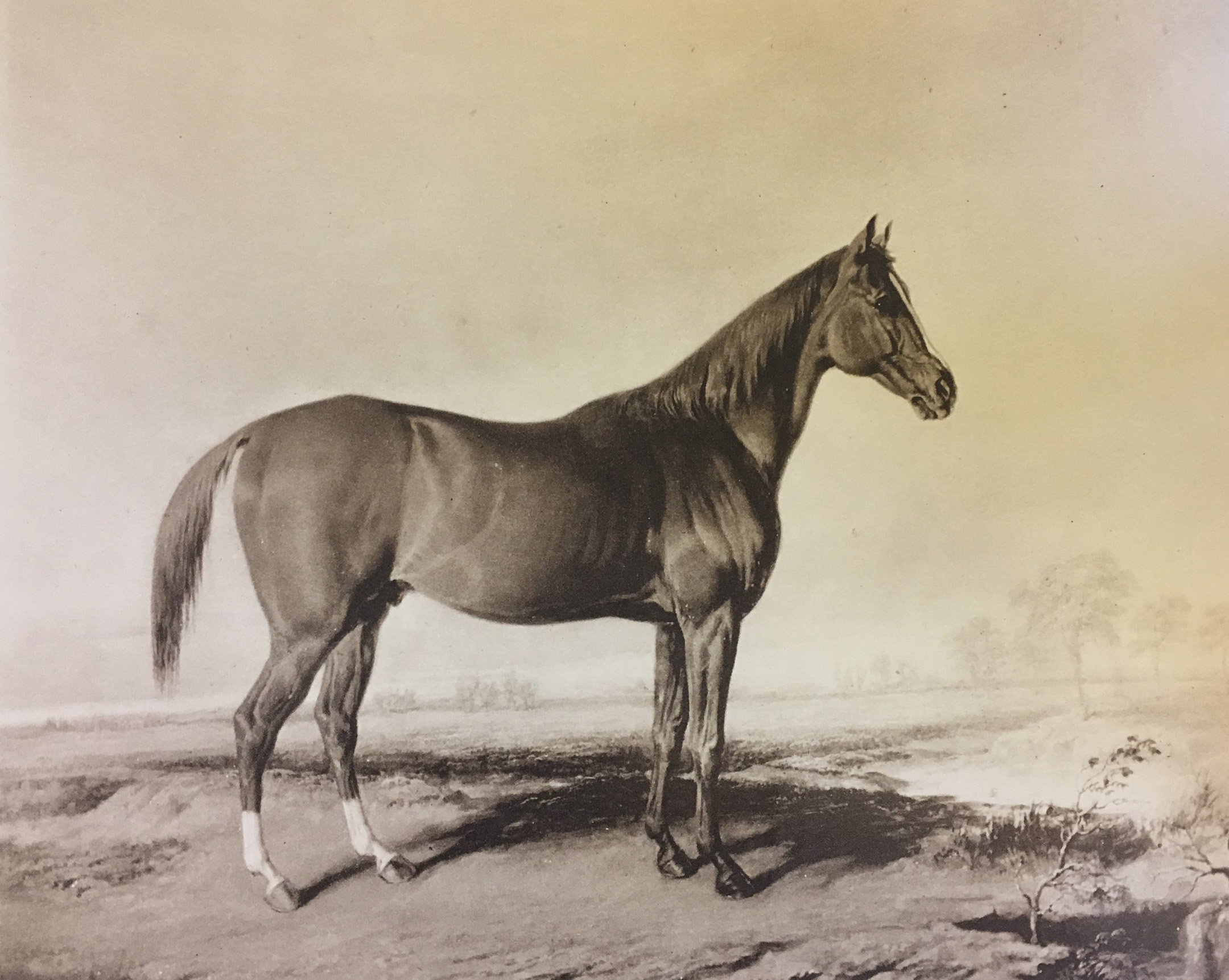 A likeness of Boston by Edward Troye, 1833 (Keeneland Library Collection)