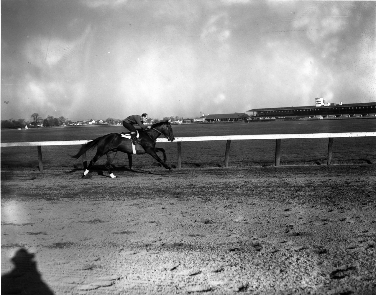 Coaltown working out at Jamaica Racetrack, April 1949 (Keeneland Library Morgan Collection/Museum Collection)