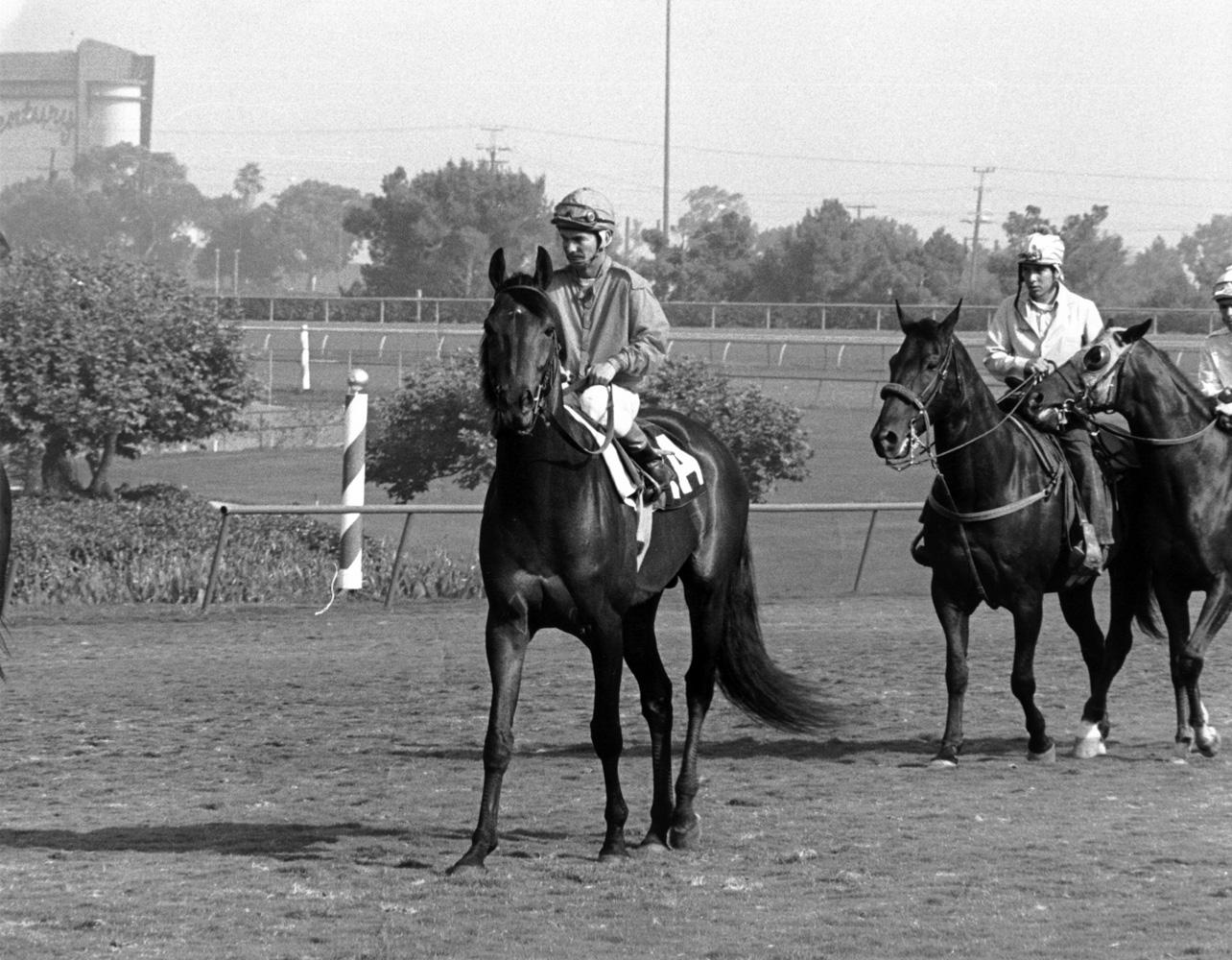 Cougar II (Bill Shoemaker up) at the 1973 Sunset Handicap at Santa Anita, his last career win (Bill Mochon/Museum Collection)
