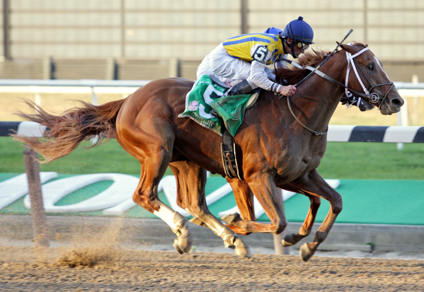 Curlin (Robby Albarado up) racing to victory in the 2007 Jockey Club Gold Cup at Belmont Park (Barbara D. Livingston/Museum Collection)