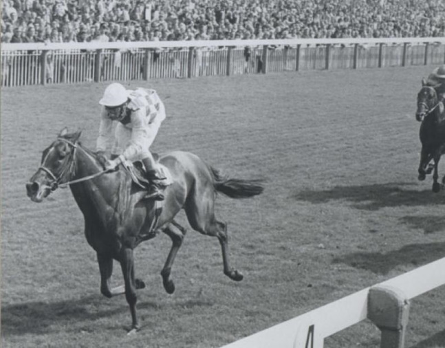 Dahlia (Lester Piggott up) racing to victory in the 1974 Benson & Hedges Gold Cup at York (The BloodHorse/Museum Collection)