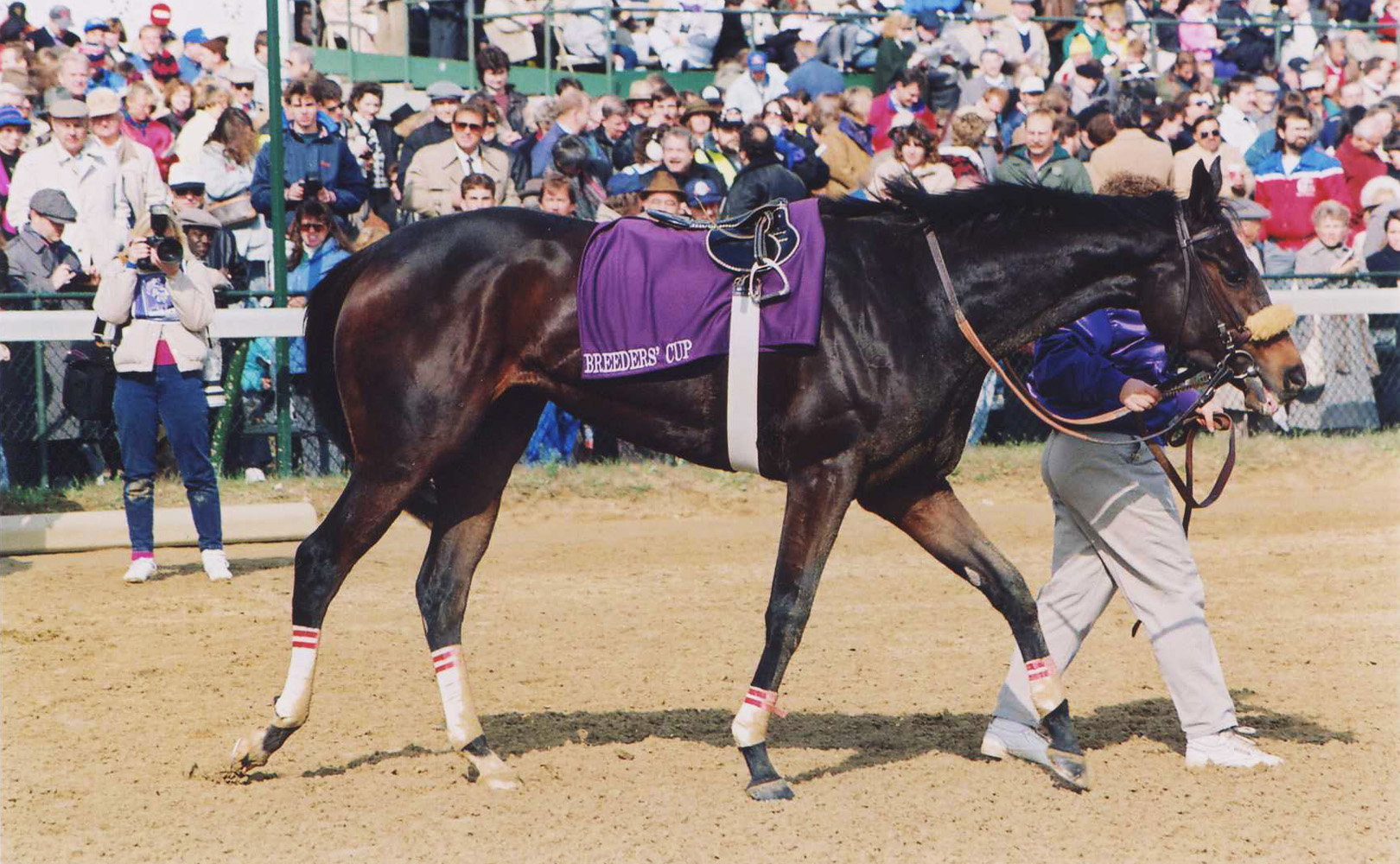 Dance Smartly after winning the 1991 Breeders' Cup Distaff (Barbara D. Livingston/Museum Collection)