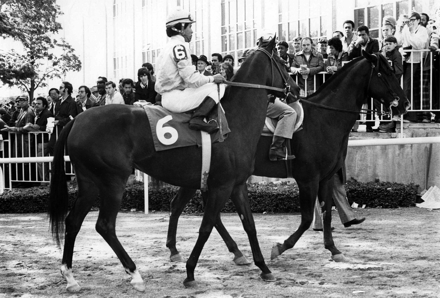 Desert Vixen (Jorge Velasquez up) leaving the paddock for a race (Ray Woolfe, Jr./Museum Collection)