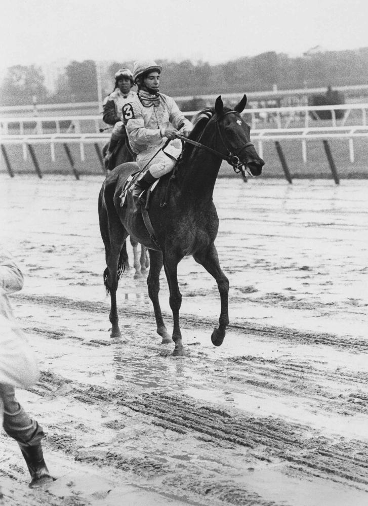 Desert Vixen (Laffit Pincay up) after winning the 1974 Beldame at Belmont Park (Ray Woolfe, Jr./Museum Collection)