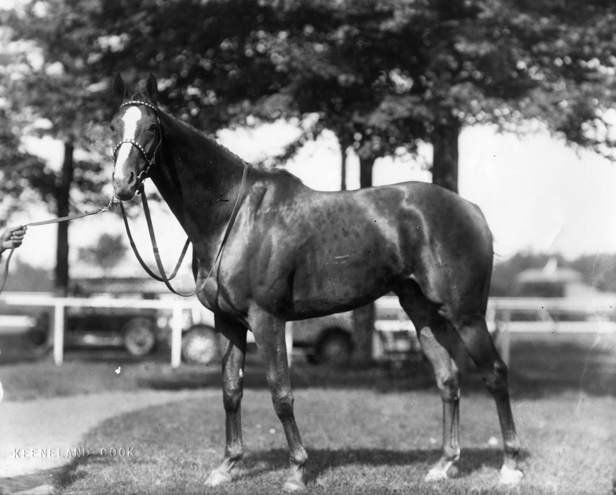 Discovery (Keeneland Library Cook Collection/Museum Collection)