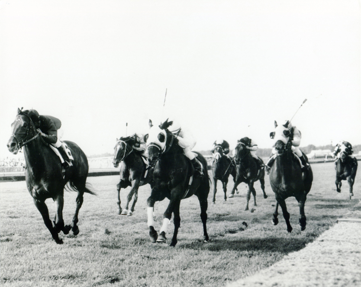 Dr. Fager (Braulio Baeza up) winning the 1968 United Nations Handicap at Atlantic City Race Course (Jim Raftery Turfotos/Museum Collection)
