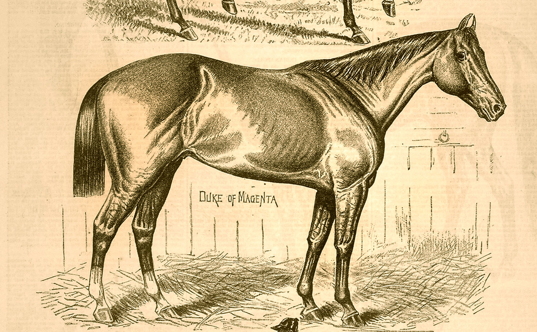 """A likeness of Duke of Magenta from the """"Spirit of the Times"""" (Keeneland Library Collection)"""