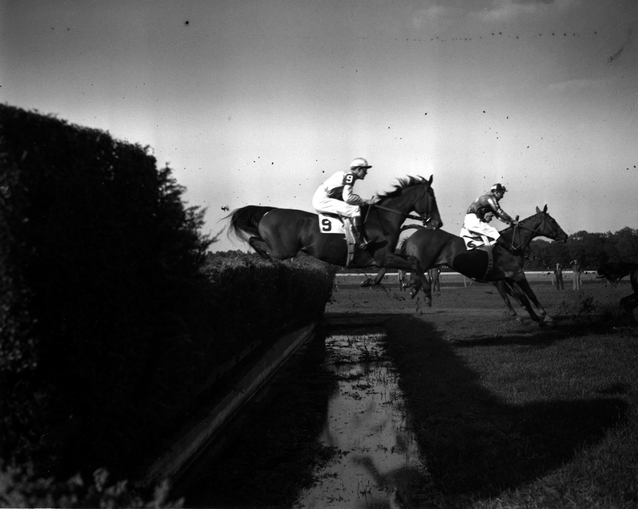 Elkridge (P. Smithwick up) taking a jump in the 1951 Grand National at Belmont Park, his final race (Keeneland Library Morgan Collection/Museum Collection)