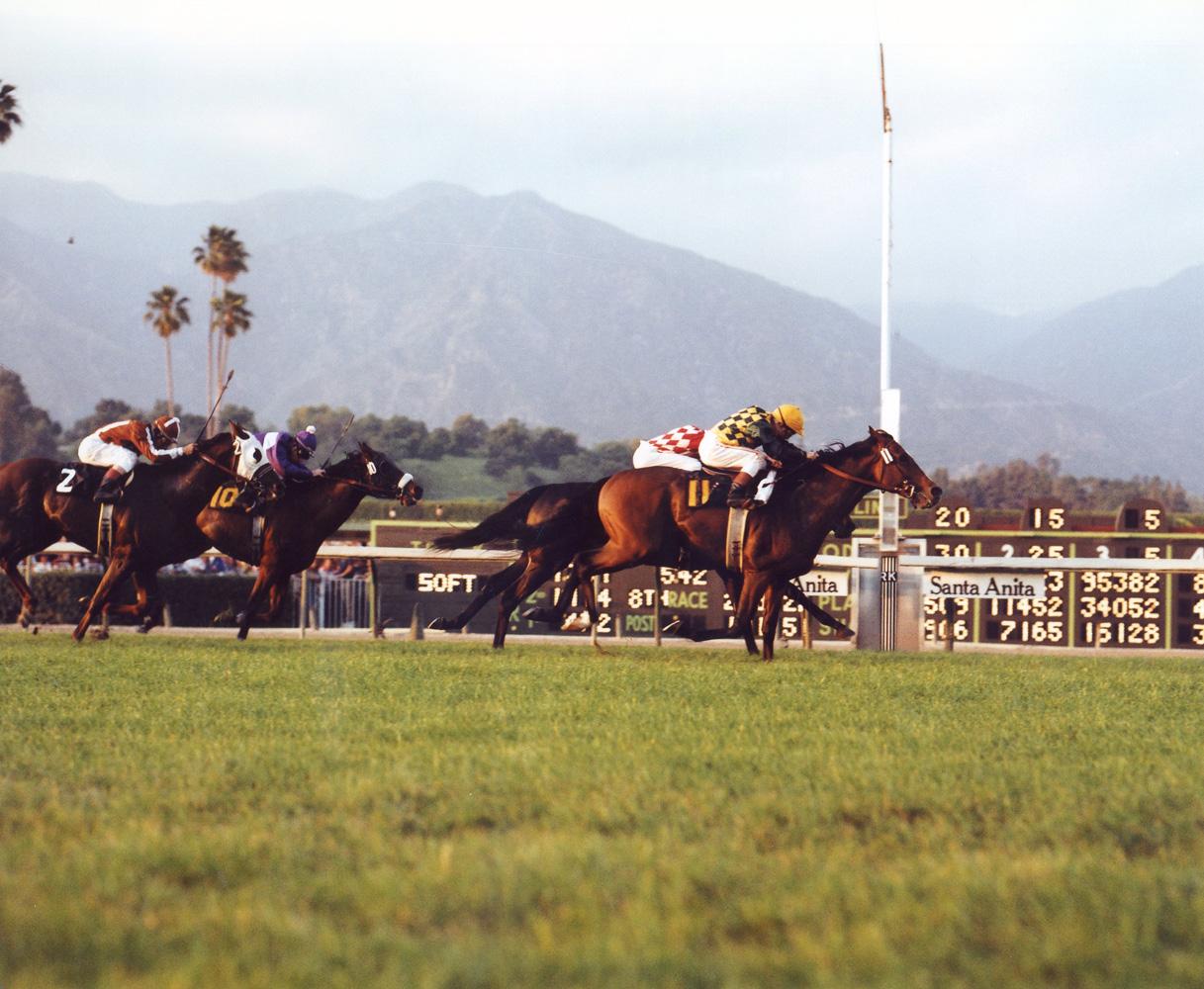 Exceller (Bill Shoemaker up) winning the 1978 San Juan Capistrano Handicap at Santa Anita (Bill Mochon/Museum Collection)