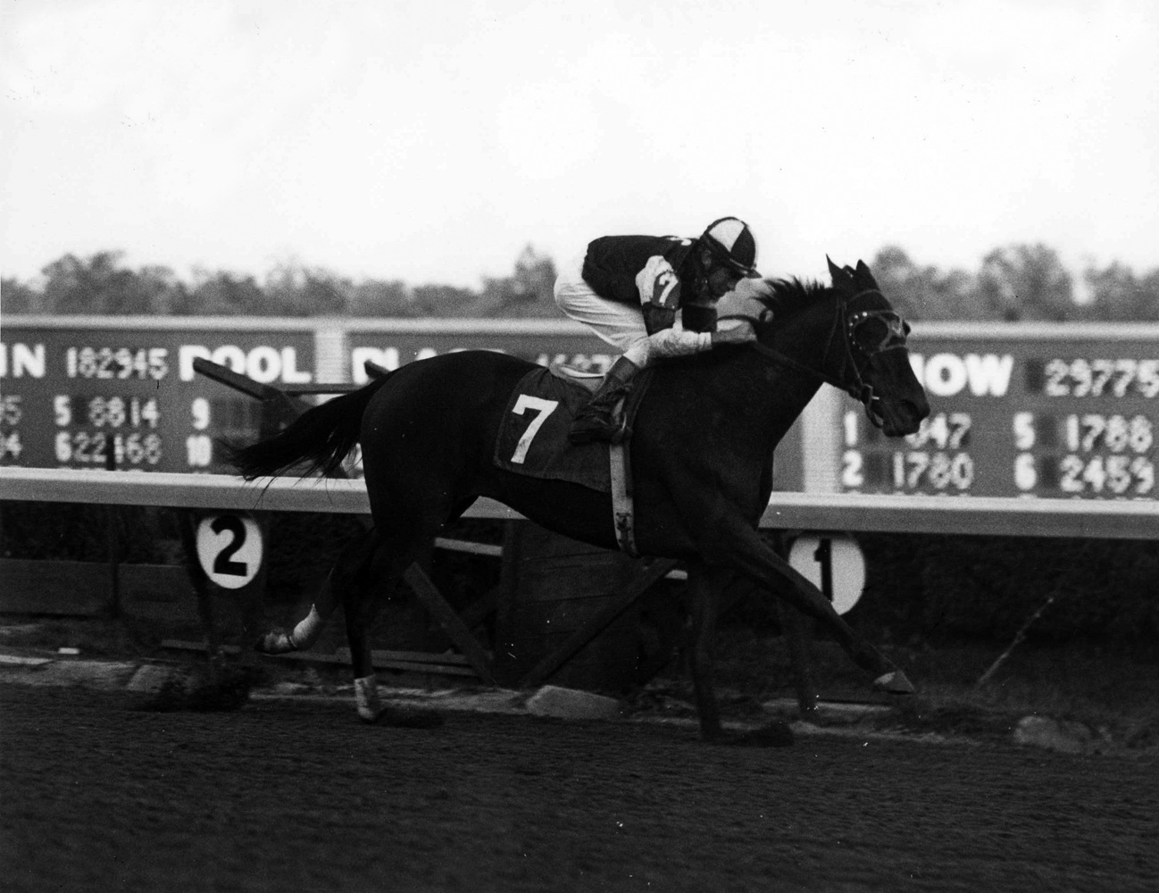 Gallant Bloom (John Rotz up) winning the 1969 Matchmaker Stakes at Atlantic City Race Course (Jim Raftery Turfotos/Museum Collection)