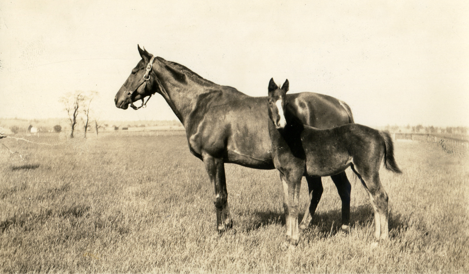 Marguerite with Gallant Fox as a foal, 1927 (L. S. Sutcliffe/Museum Collection)