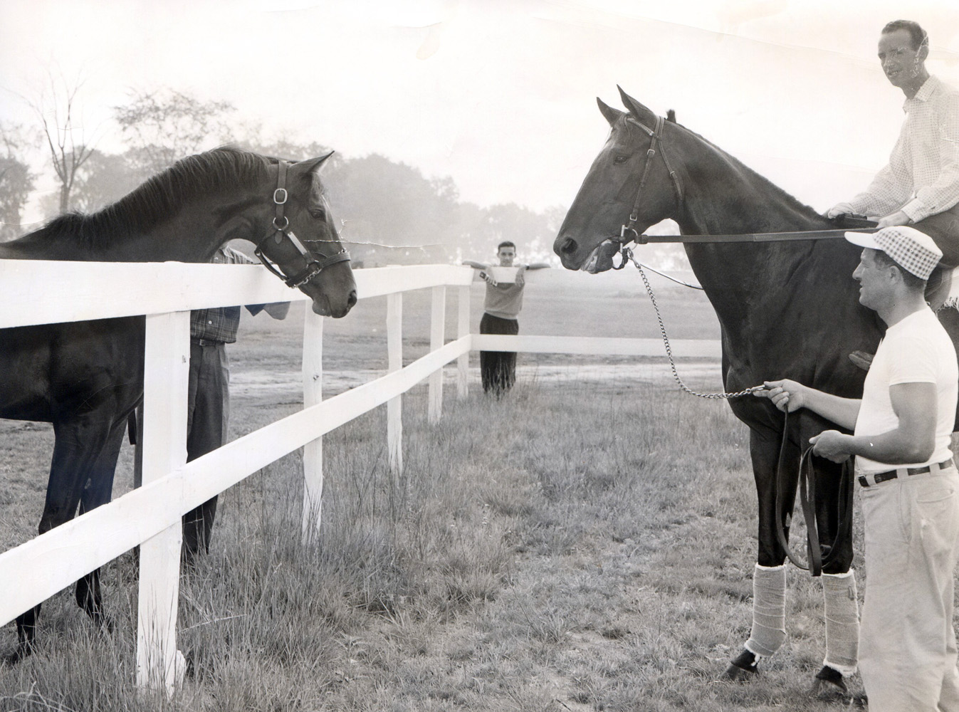 Gallant Man, left, visiting with fellow future Hall of Famer Bold Ruler, right, 1958 (Museum Collection)