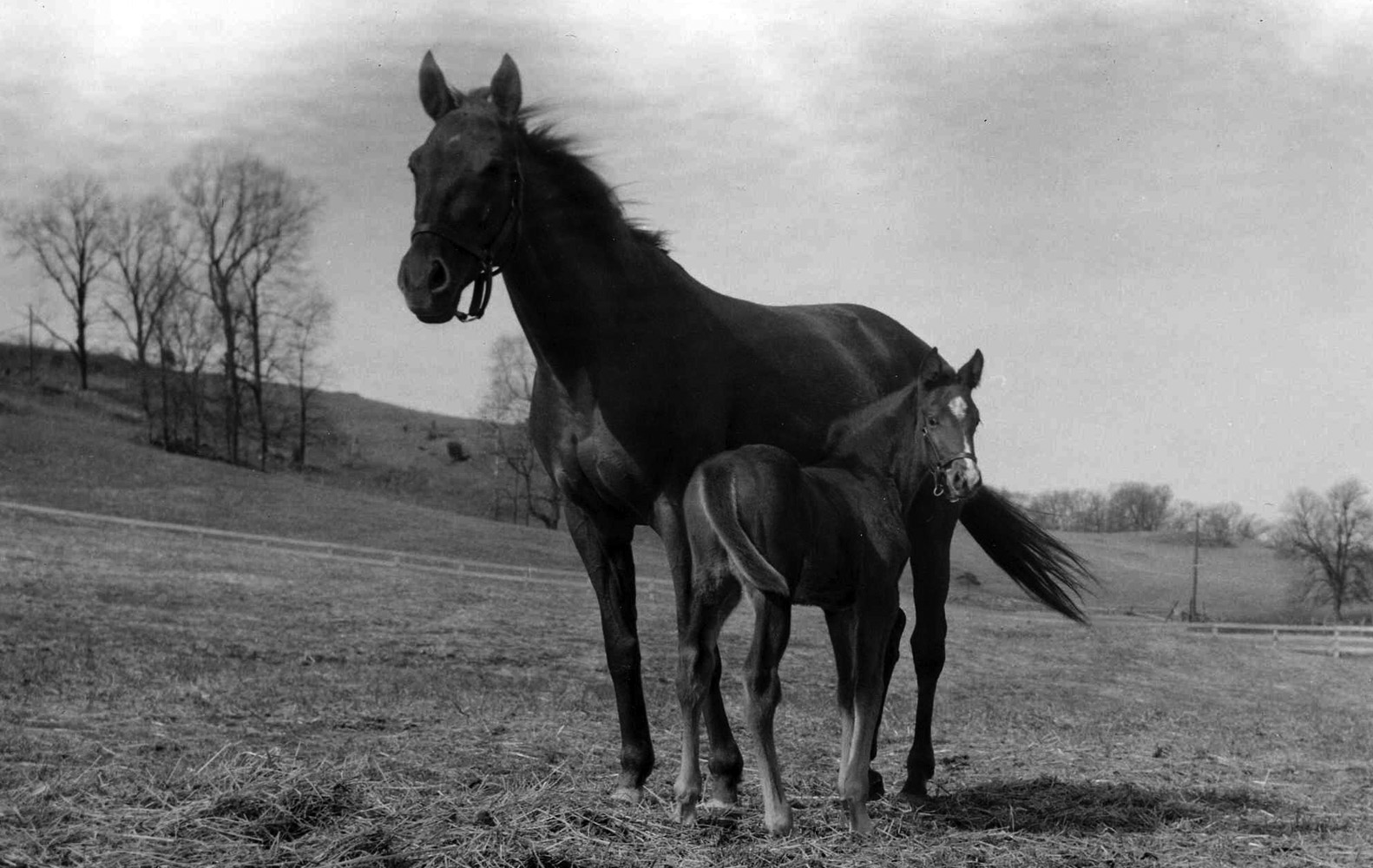 Gallorette and her foal (Museum Collection)