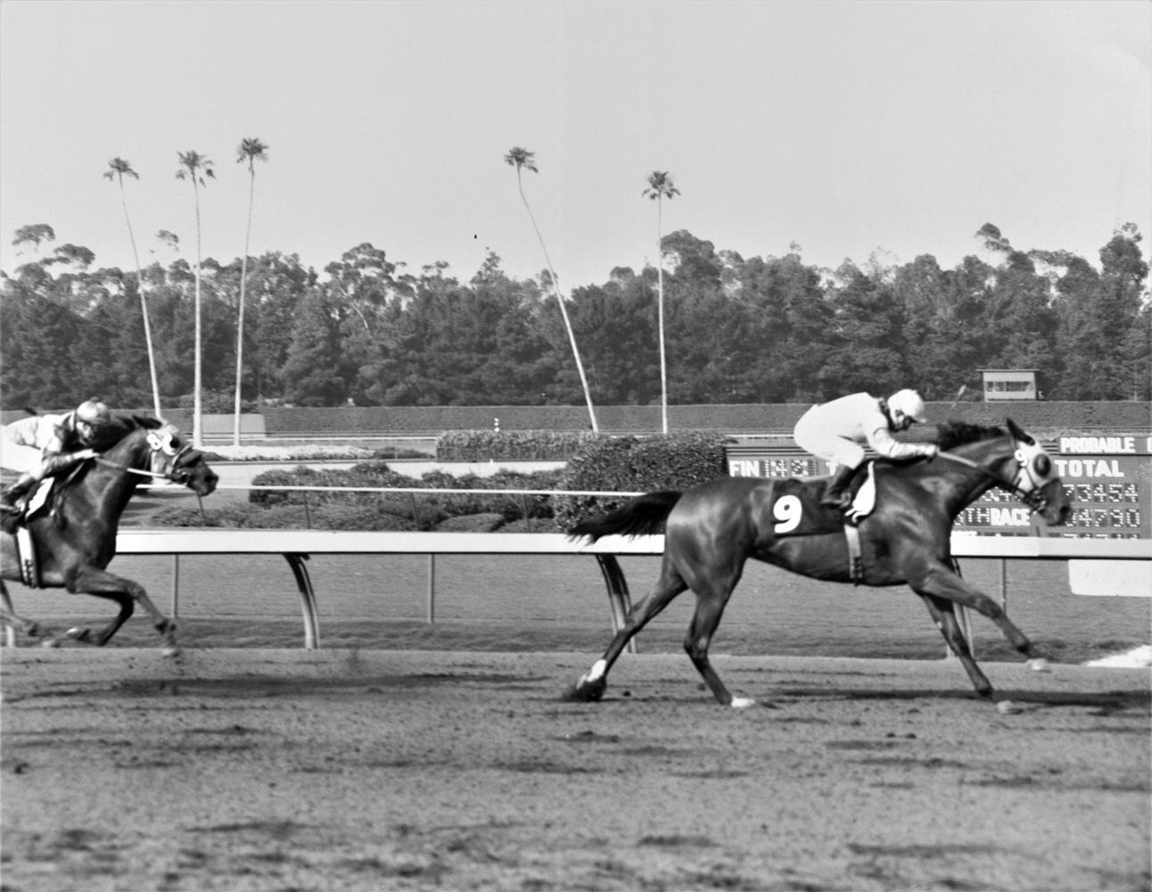 Gamely (Bill Shoemaker up) winning the 1967 Princess Stakes at Hollywood Park (Keeneland Library Thoroughbred Times Collection)