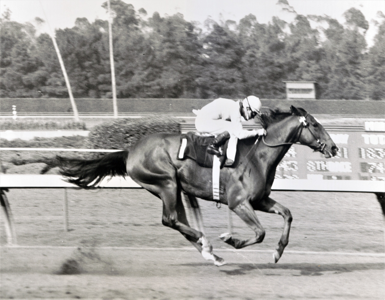 Gamely (Wayne Harris up) winning the 1968 Wilshire Handicap at Hollywood Park (Keeneland Library Thoroughbred Times Collection)