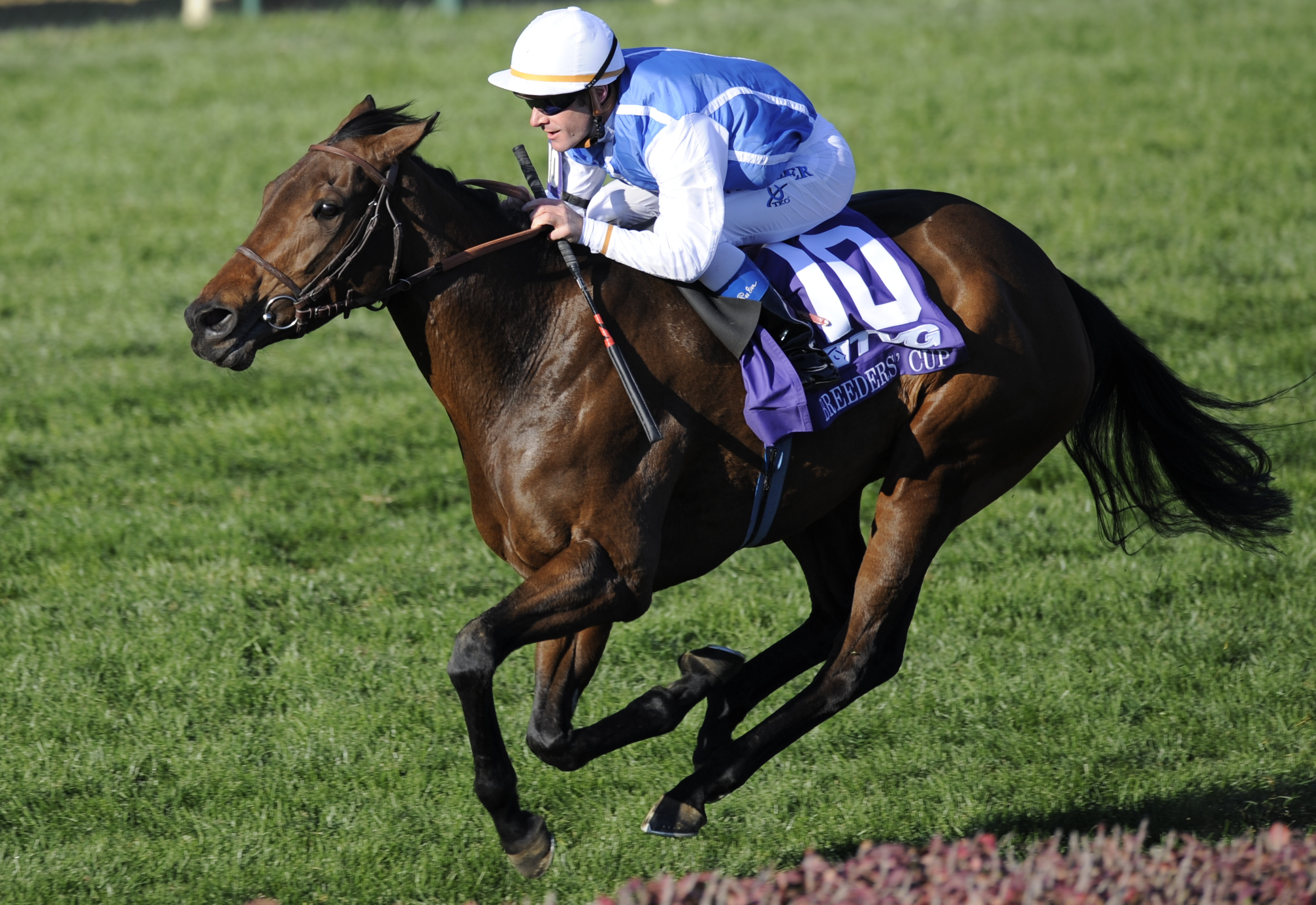 Goldikova (Olivier Peslier up) in the 2010 Breeders' Cup Mile at Churchill Downs (Breeders' Cup Photo)