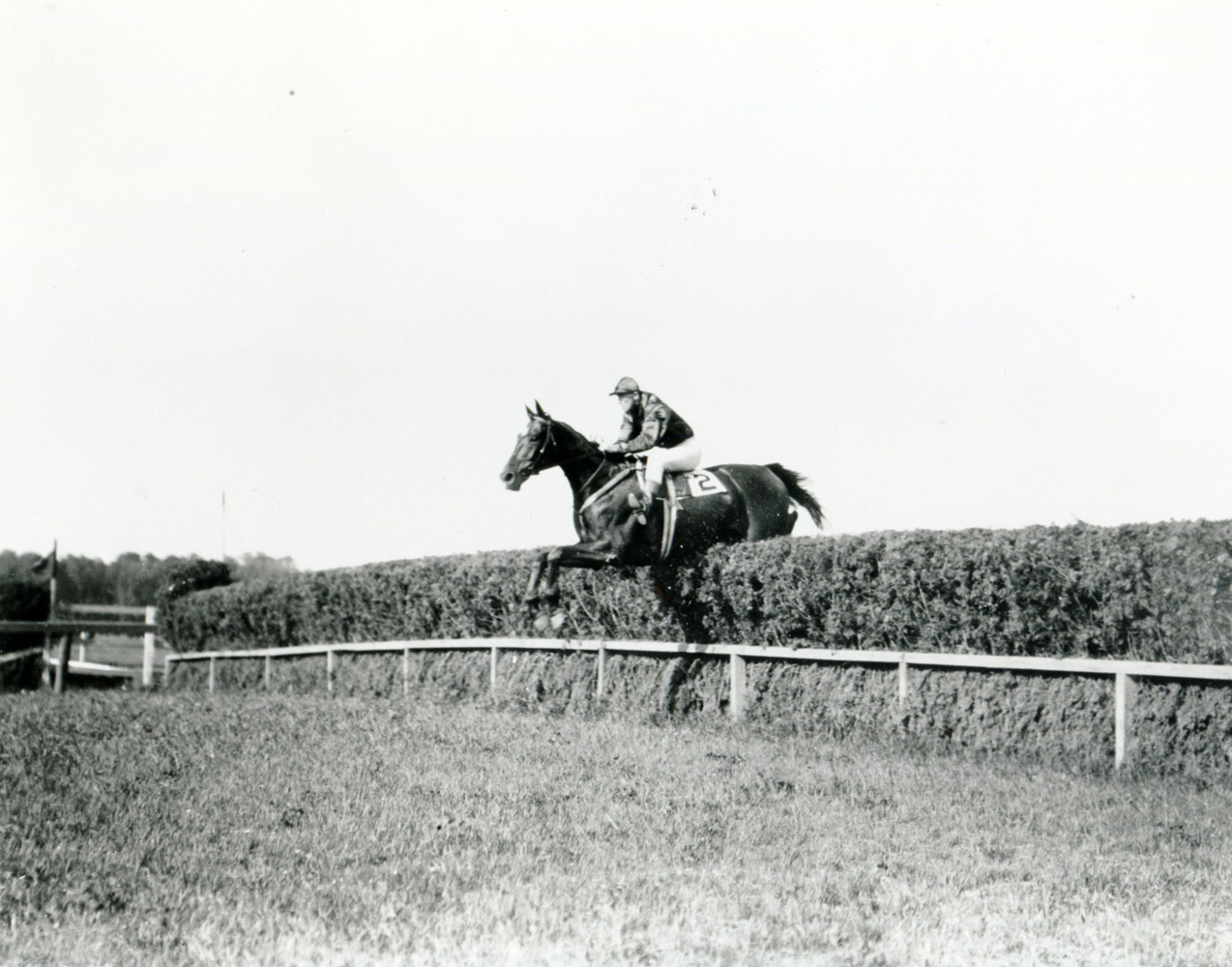Good And Plenty taking a jump in the Whitney Memorial Steeplechase at Belmont Park (Keeneland Library Cook Collection/Museum Collection)