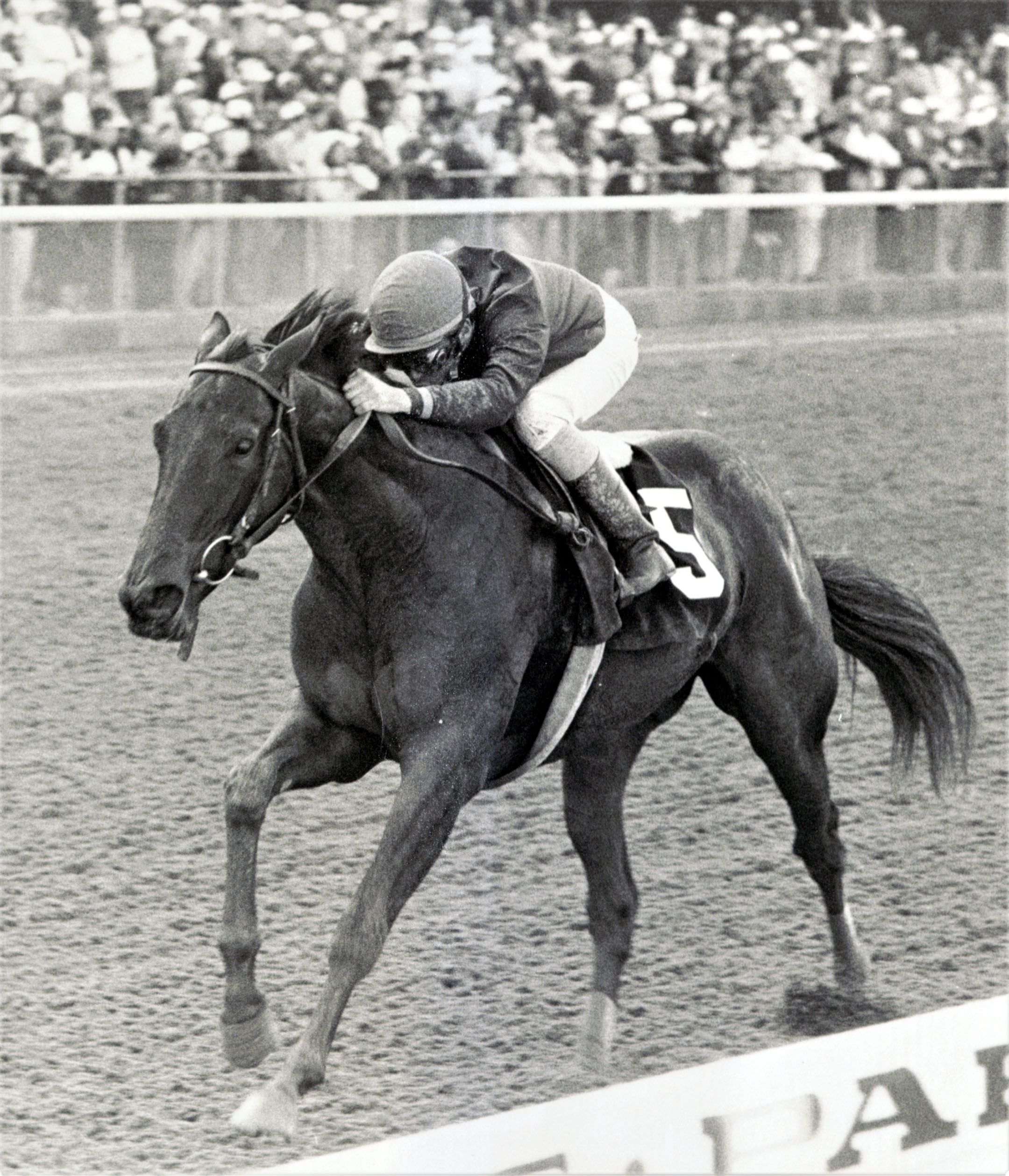 Heavenly Prize (Mike Smith up) wins the 1993 Frizette Stakes at Belmont Park (Keeneland Library Thoroughbred Times Collection)