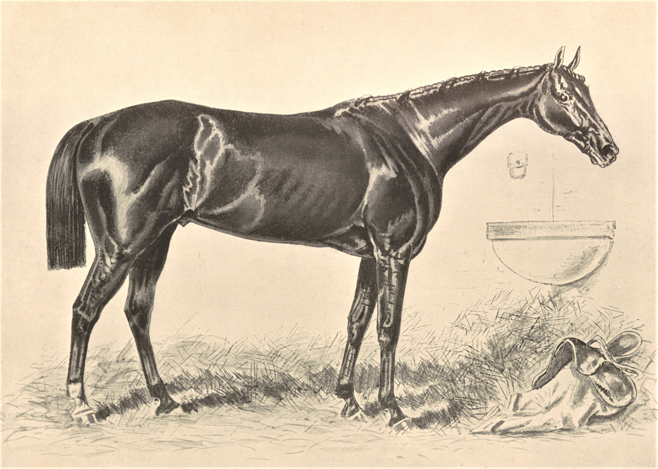 "Illustration of Hindoo from Vosburgh's ""Racing in America"" (Keeneland Library Collection)"