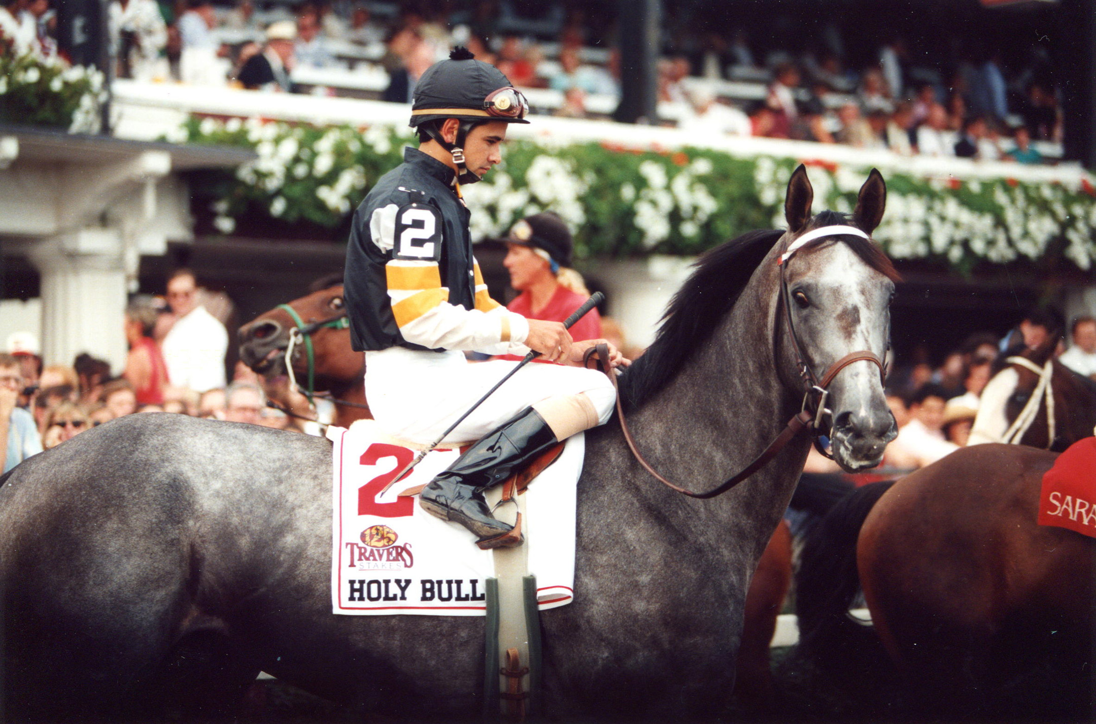 Holy Bull (Mike Smith up) entering the track for the 1994 Travers at Saratoga (Barbara D. Livingston/Museum Collection)