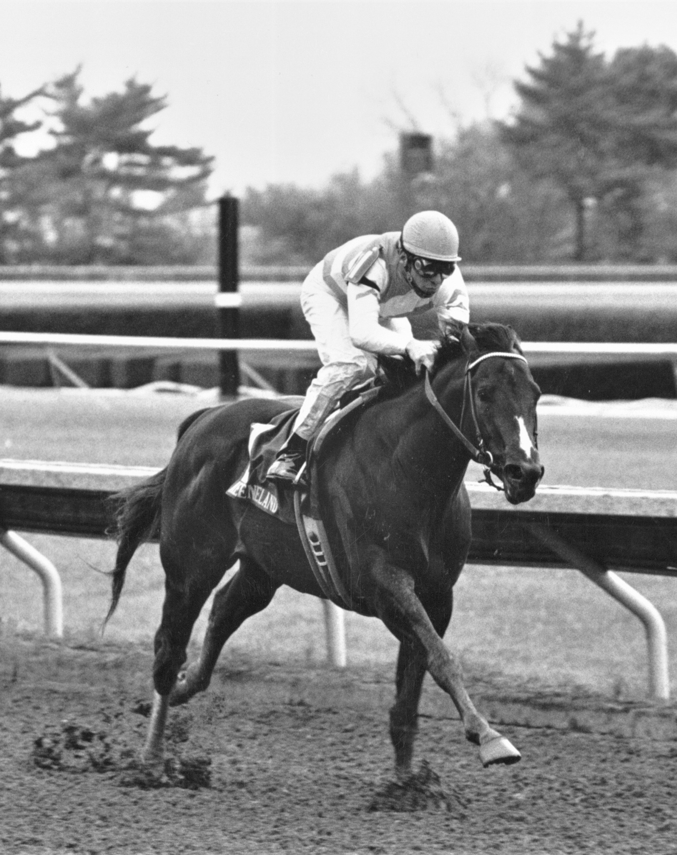 Housebuster (Craig Perret up) racing to victory in the 1990 Lafayette Stakes at Keeneland (Keeneland Association Bill Straus)