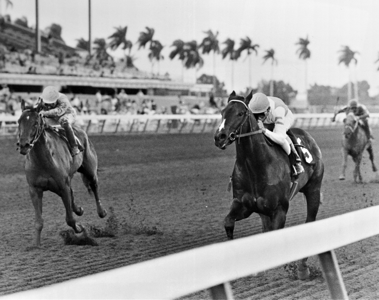 Housebuster (Craig Perret up) charging down the stretch to win the 1990 Spectacular Bid Stakes at Gulfstream Park (Jim Raftery Turfotos)