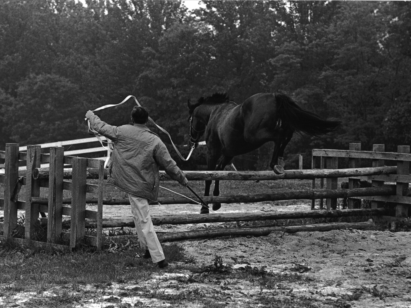 Jay Trump being schooled over a fence (Museum Collection)