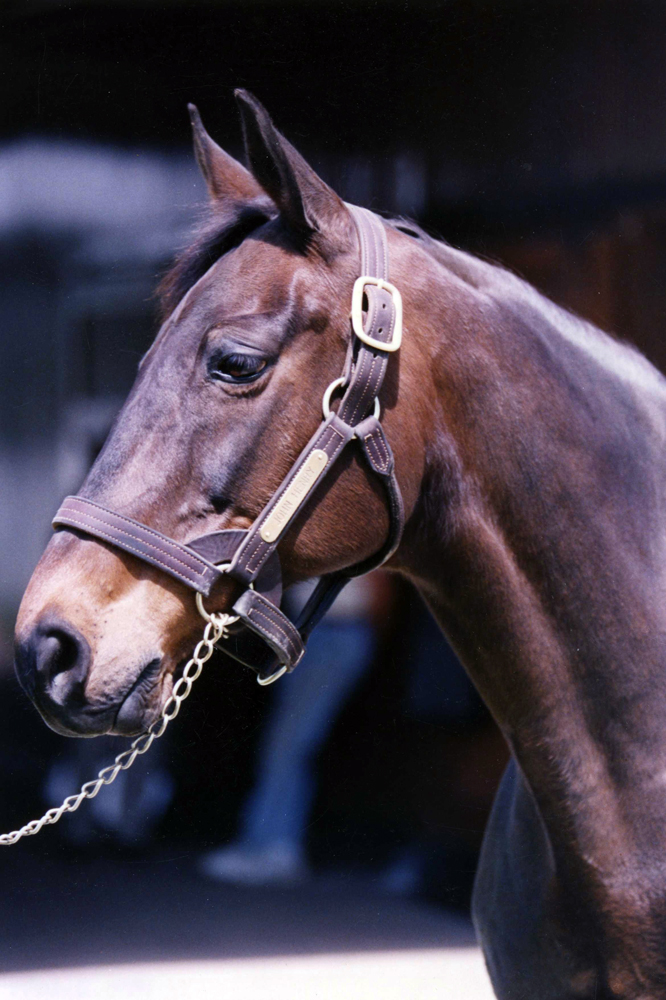 John Henry in retirement at Kentucky Horse Park in 1992 (Barbara D. Livingston/Museum Collection)