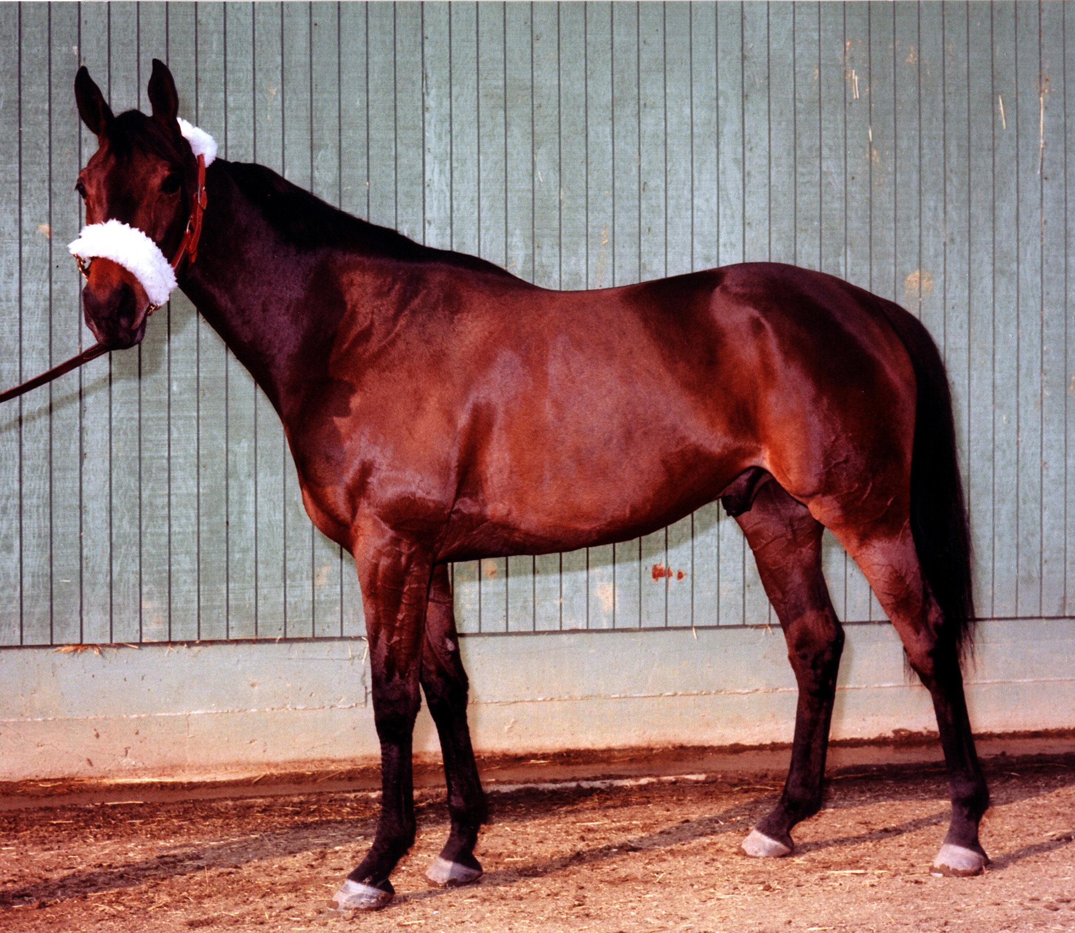 John Henry at Santa Anita in 1980 (Bill Mochon/Museum Collection)
