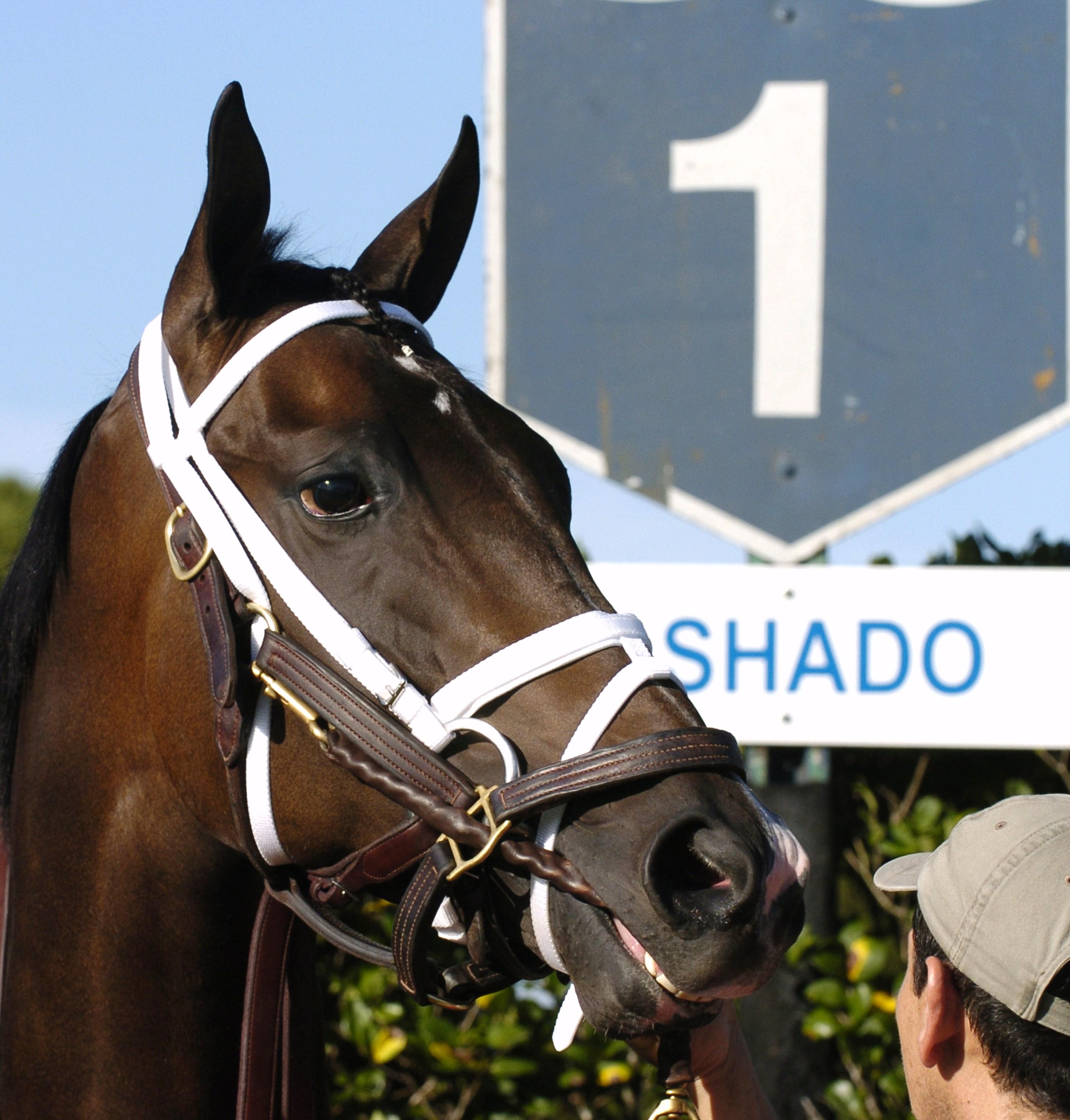 Ashado at Fair Grounds, 2004 (Skip Dickstein)