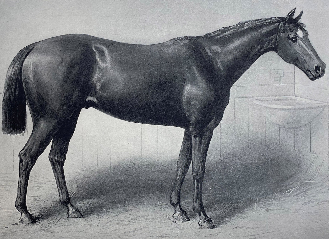 """Illustration of Longfellow from """"Racing in America, 1866-1921"""" (Museum Collection)"""