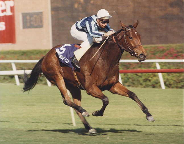 Miesque winning the 1987 Breeders' Cup Mile at Hollywood Park (Hollywood Park Photo/Museum Collection)