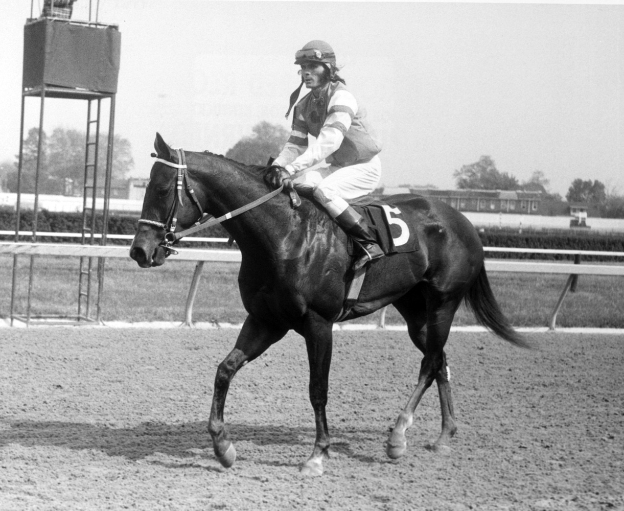 My Juliet (Alan Hill up) after winning the 1975 Black Eyed Susan Stakes at Pimlico (Keeneland Library Thoroughbred Times Collection)