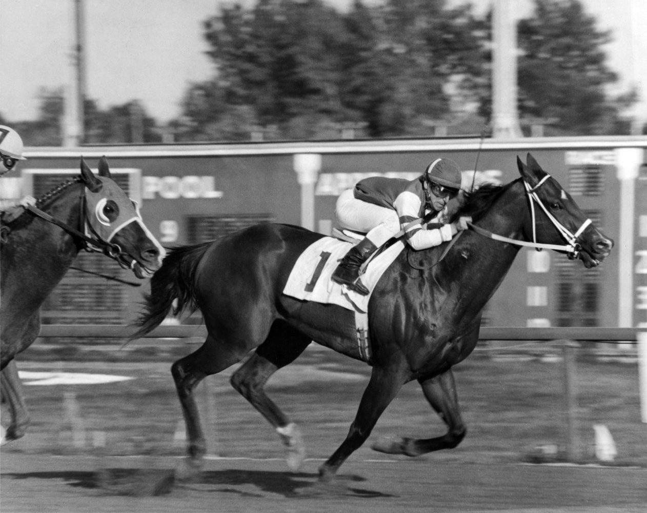 My Juliet (Tony Black up) winning the 1977 Michigan Mile at Detroit Race Course, her last career win (Keeneland Library Thoroughbred Times Collection)