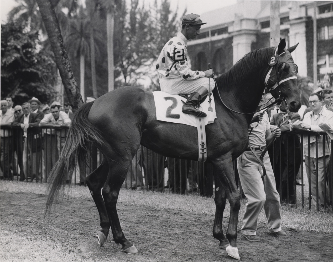Nashua (Eddie Arcaro up) in the paddock at Hialeah prior to the 1955 Flamingo Stakes (Museum Collection)