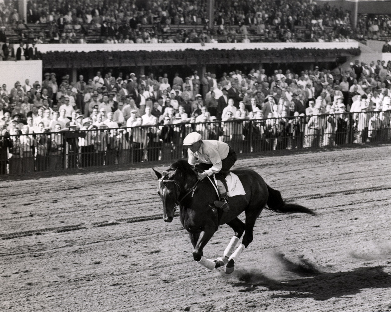 Nashua being exercised at Hialeah, March 1955 (Museum Collection)