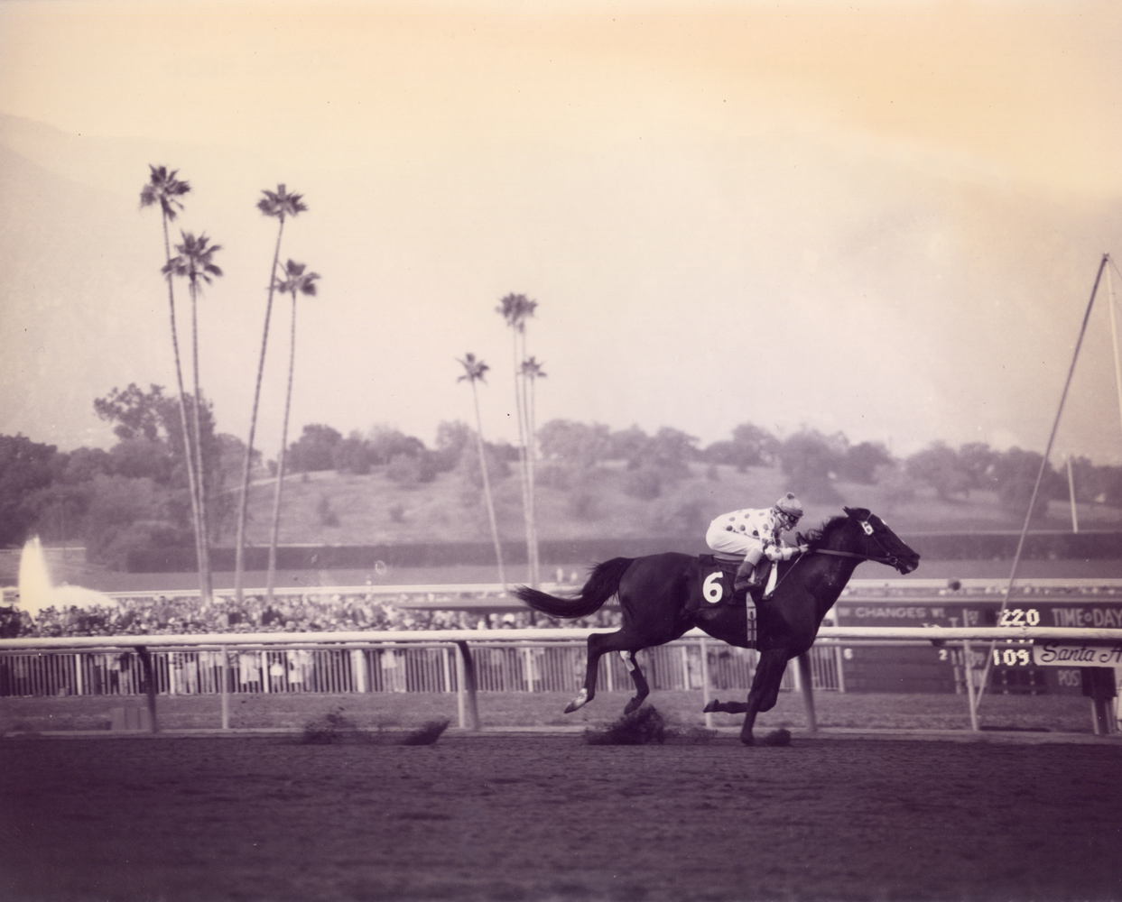 Native Diver (Jerry Lambert up) winning the 1967 San Carlos Handicap at Santa Anita (Santa Anita Photo/Museum Collection)